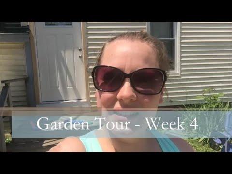 A Garden Tour  – Week Four