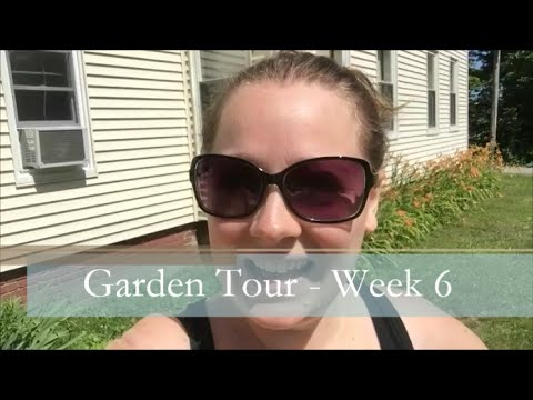 A Garden Tour – Week Six