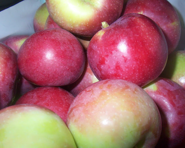 apple picking and preserving