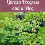 2016 Garden Progress and a vlog