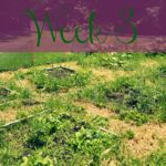 A Garden Tour – Week Three