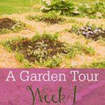 A Garden Tour – Week One