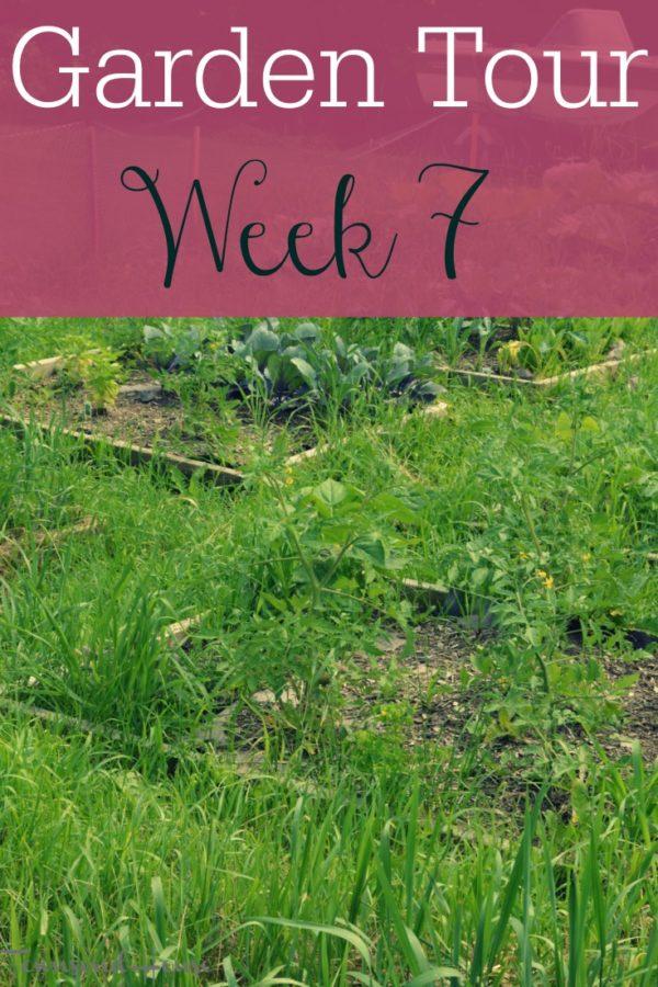 Garden Tour – Week 7