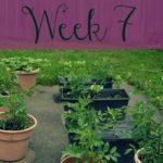 A Garden Tour – Week Seven