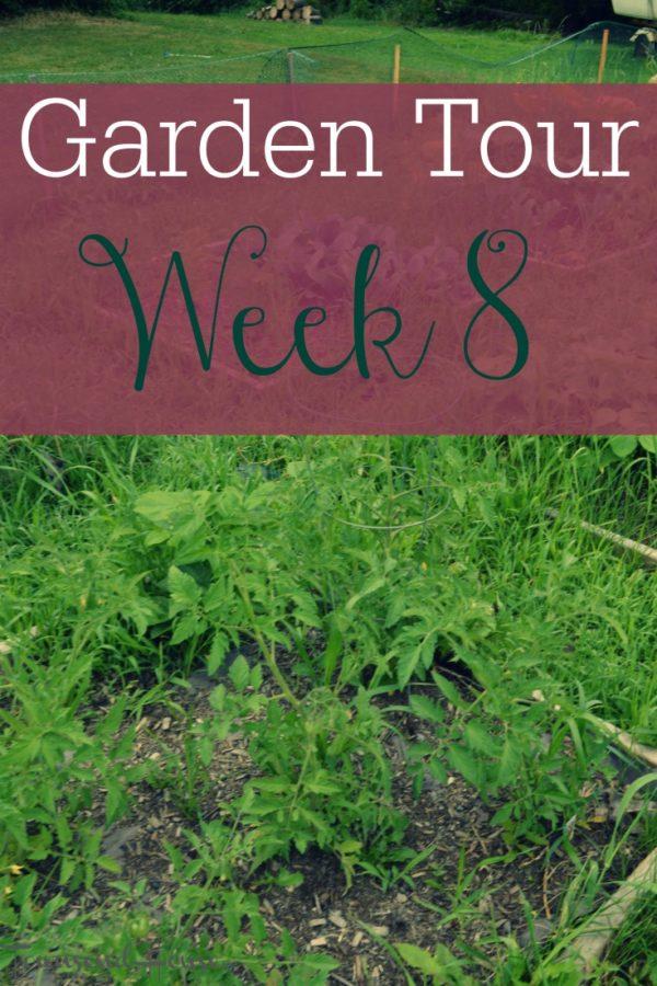 Garden Tour – Week 8