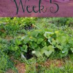 A Garden Tour – Week Five