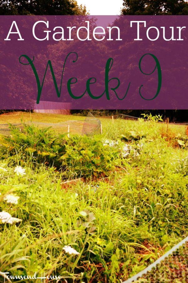 A Garden Tour – Week Nine