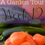 A Garden Tour – Week Twelve
