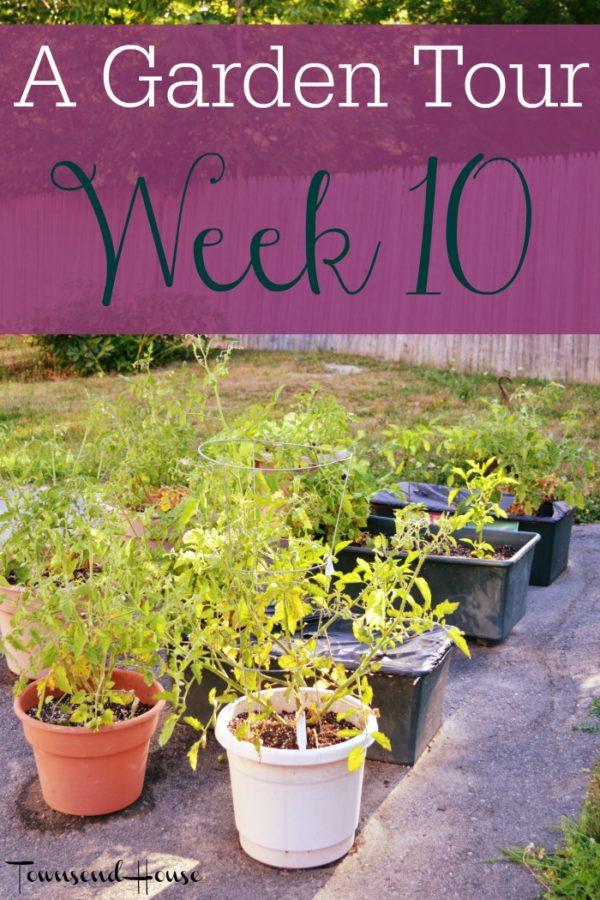 A Garden Tour – Week Ten