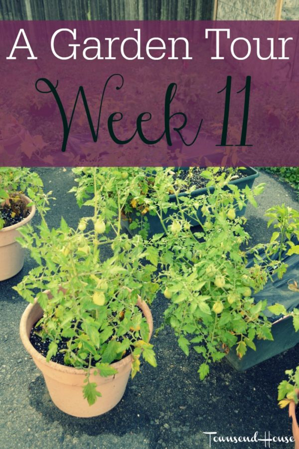 A Garden Tour – Week Eleven