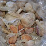planting garlic – 2013