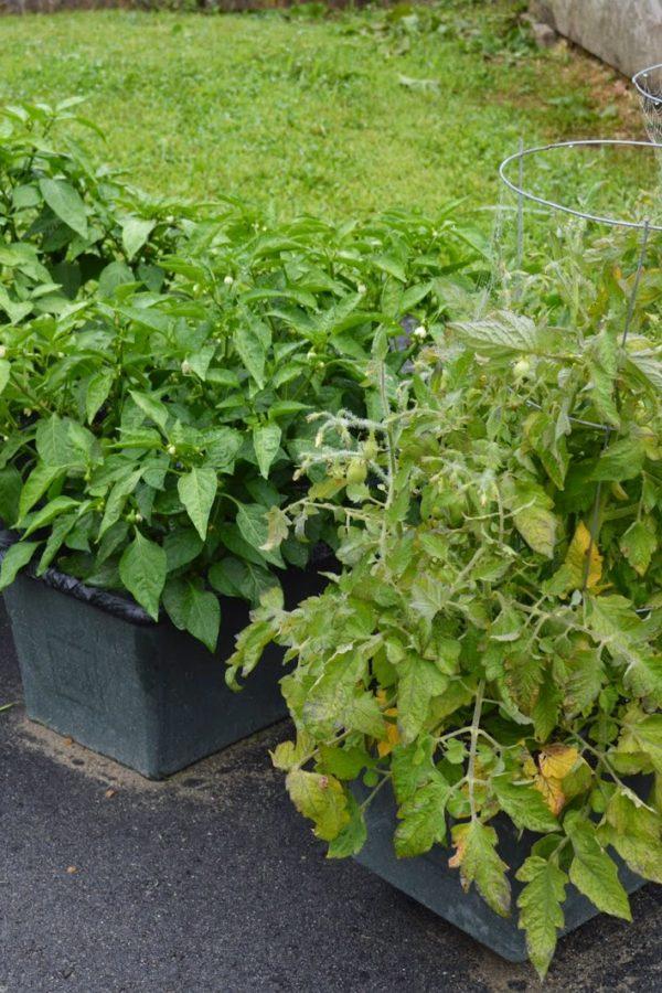 garden happenings
