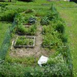my garden in pictures