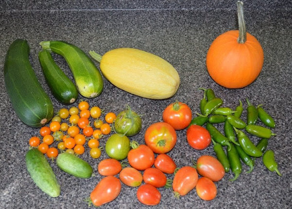 what i am harvesting from my garden